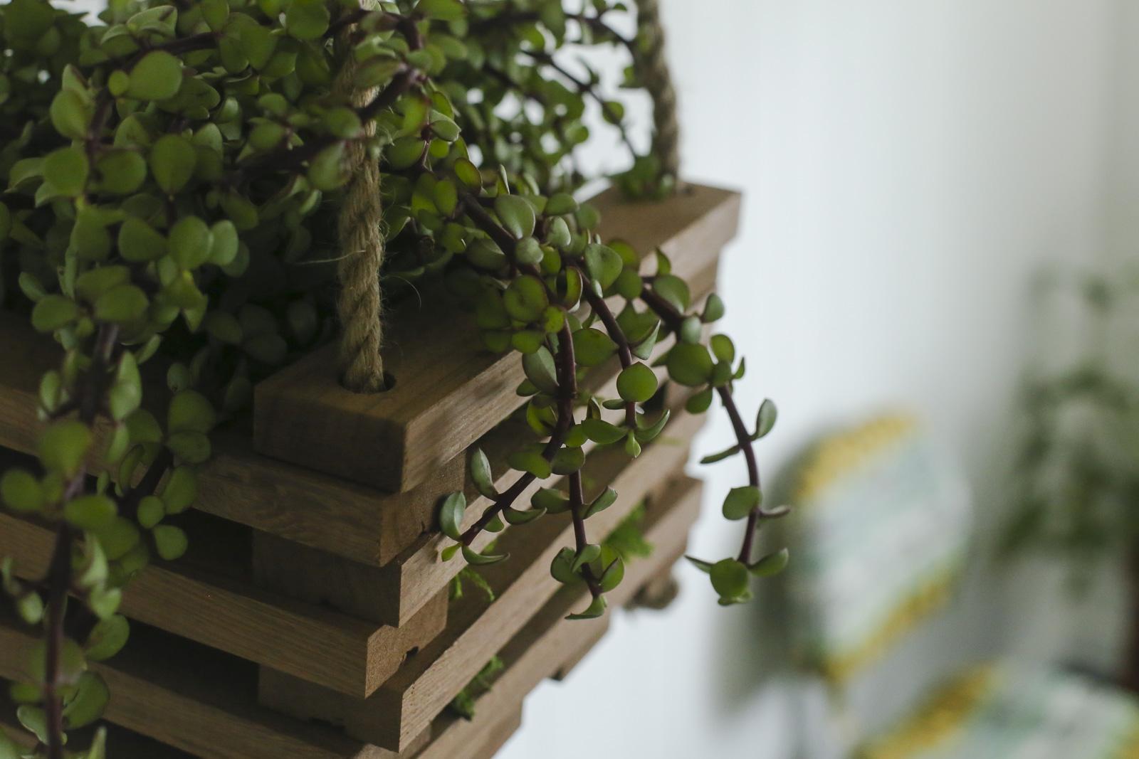 วิธีทำกระถางต้นไม้แบบแขวนอย่างง่าย